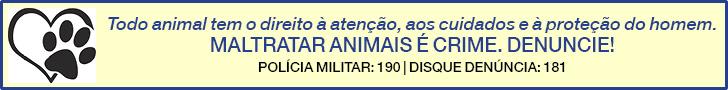 Maltratar animais H3